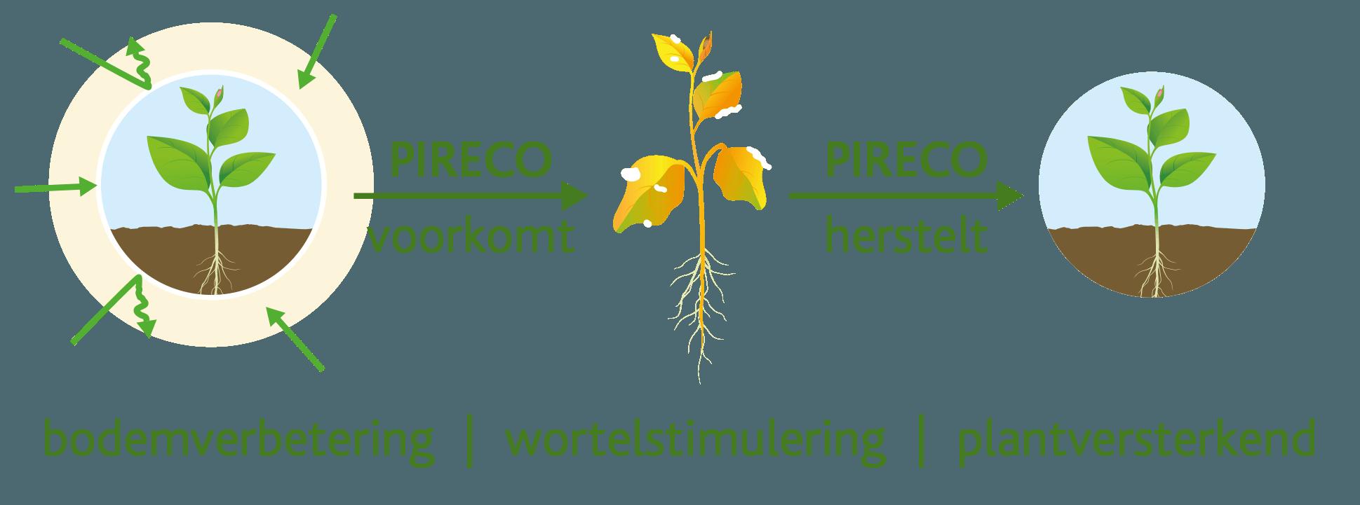Pireco voorkomt & Pireco herstelt